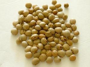 Toor Beans