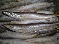 Kooth Fish