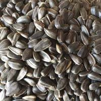Confectionery Sunflower Seeds