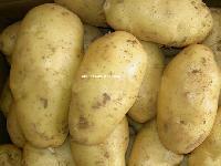 Bulk Potato