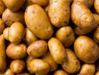 New Year Fresh Potato