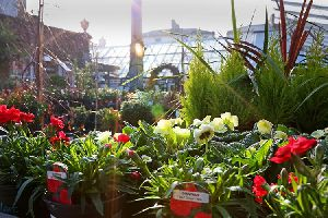 Nursery and gardening plants
