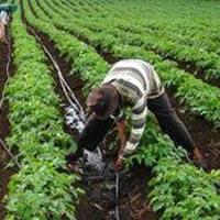 Mahogany Plantation Services