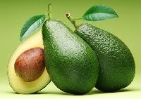 Avocado - Butter Fruits