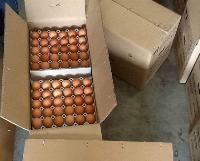 Fresh White & Brown Chicken Eggs