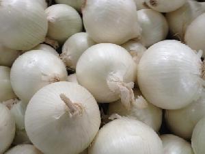 Fresh White Onions