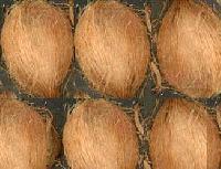 Semi Husked Coconut - 01