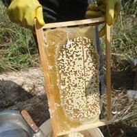 Litchi Flower Honey