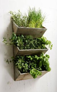 Garden Timber Plants