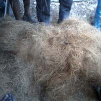 Coir Golden Fibre