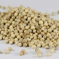 Organic White Pepper Seeds