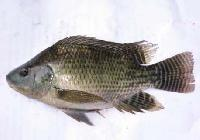 Fresh Sea Water Fish