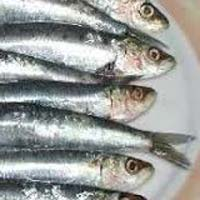 Frozen Whole Sardine Fish