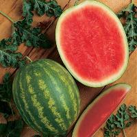 F1 hy watermelon seed