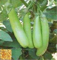 Only Bottle gourd seed