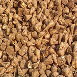 Sugar Beet Seeds