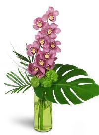 Blushing Grace Orchids
