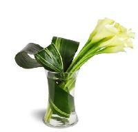 Classic Elegance Calla Vase