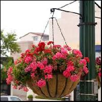 Garden Hanging Baskets