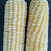 Frozen Corn Cob