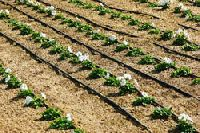 Irrigation System Service