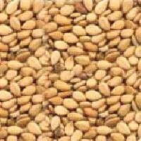 Sesame Seeds - 01