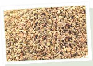 Bishops Seeds (ajwain)