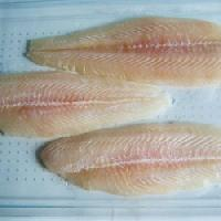 Frozen Fish Fillet