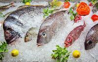 Fresh Frozen Fish