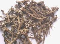 Anacyclus Pyrethrum Root Extract