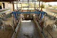 Mini Milking Parlor