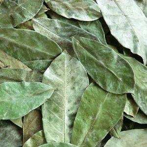 Graviola Dry Leaves