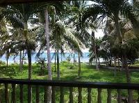 Kobari Palm Plant