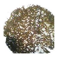Grass Carp Fish Seeds