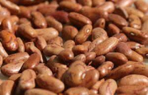 Gunwanti  Light Speckled Kidney Beans