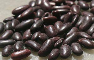 Gunwanti Red Kidney Beans