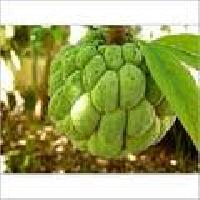 Frozen Custard Apple Pulp