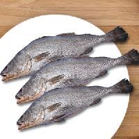 Ghol Fish - Manufactur...