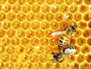 Nature Bee Honey