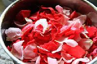 Fresh Rose Rose Petals