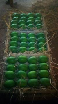 Large Grade A Ratnagiri Alphonso (Haphoos) Mangoes