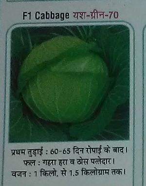 F1 Yash-Green-70 Fresh Cabbage seed