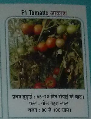 F1 Akash Fresh Tomato