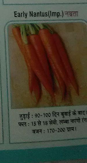 Early Nantus Namrta Fresh Carrot