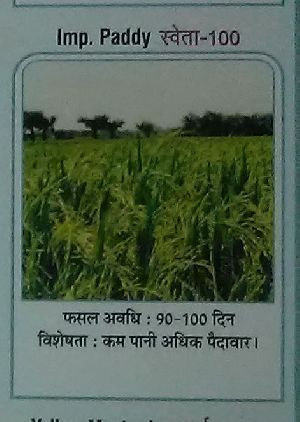 Shweta-100 Paddy Seeds