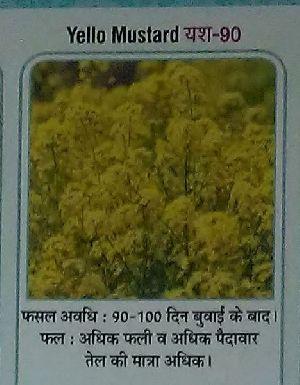 Yellow Mustard Yush-90