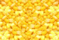 Sweet Corn Kernels