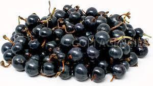 Fresh Blackcurrant