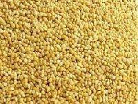 Foxtail Millet