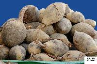 Fresh Baobab 01